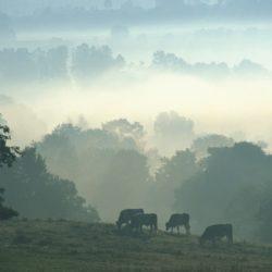 026419-jura-brume-matinale-sur-le-jura